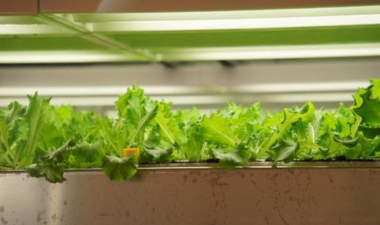 水耕栽培による農業の工業化-農業政策